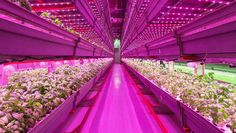 [NYC Infra]- Urban agriculture could change the way inhabitants of cities think about their food in a big way.  It could make cities more self-sufficient and the people who live there healthier in the process.