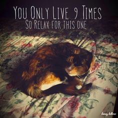 You only live 9 times- Instacanv.as Photo by dannydellovo