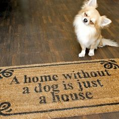 In lovee with this puppy and the mat is so true :)