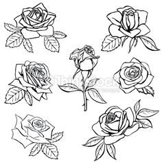 Set Rose sketch. Black outline on white background. Vector illustration.