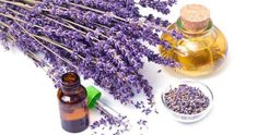 Essential Oils such as Frankincense and Lemongrass have helped thousands to overcome Cancer. Read testimonials and BUY GRADE essential oils here. Essential Oils For Cancer, List Of Essential Oils, Lavender Buds, Lavender Oil, Lavender Varieties, Lavender Benefits, Chapped Lips, Oil Uses, Organic Oil