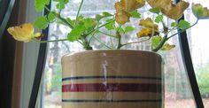 Cum se face altoirea cu ramură detașată, sub scoarța terminală Plantar, Paradis, Wisteria, Planting Flowers, Beautiful Flowers, Planter Pots, Home And Garden, Organic, Gardening