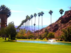 O'Donnell Golf | #PalmSprings | Photo by Randy Garner