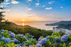 6月21日、伊豆松崎町の牛原山・アジサイの丘からの夕陽と風景。夏至の前後だけ夕陽が見られるここで花のある風景写真を撮影するには、梅雨の季節と重なるばかりかアジサ...