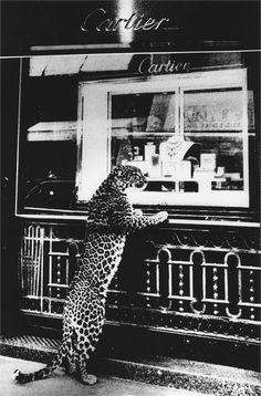 Panther de Cartier  #Cartier #Luxe #Jewelery #Panther