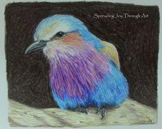 Decorator Art Original Joy Colored Pencil Bird Lilac-breasted Roller Kenya Study