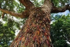 """Chankiri tree"" (The Killing Tree), in Choeung Ek Killing Fields, Phnom Penh, Cambodia."