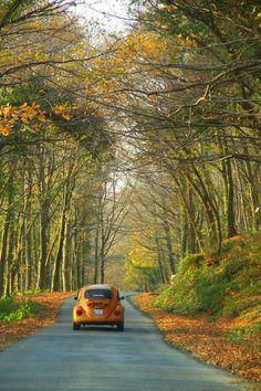 Volkswagon Beatle by mirelfis on flickr