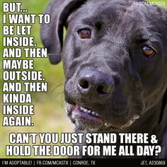 I want to be let inside….and then outside...=)) Universal dog behavior.