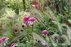 Ogród tworzę nowoczesny czyli wewnętrzna walka jak nie zostać kokoszką :)…