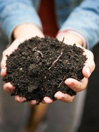How Does your garden grow?With compost!