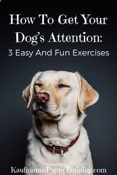 Do you know what one of the most important and underrated aspects of positive dog training is? Having you dogs attention.Which is why this post cover how to get your dog's attention as well as three easy and fun exercises to train this behavior. Read more at kaufmannspuppytra... Kaufmann's Puppy Training