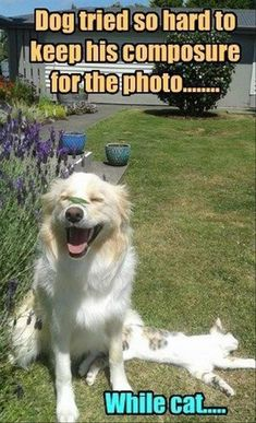 Funny Animal Pictures Of The Day – 30 Pics