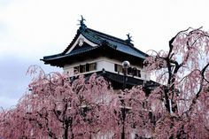 Where, when, and how to see cherry blossoms in Japan this Spring