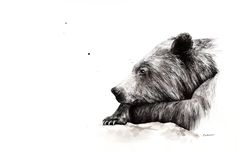 """What if..."" (bear) - ORIGINAL - 150€ Illustration by Ariane Relander Ink Illustrations, Inktober, Bear, Fine Art, The Originals, Drawings, Bears, Sketches, Drawing"