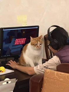 Cute Funny Animals, Funny Cute, Hilarious, Cat Memes, Funny Memes, Cat Aesthetic, Oui Oui, Pretty Cats, Animal Memes