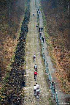 Arenberg Forest | Paris-Roubaix