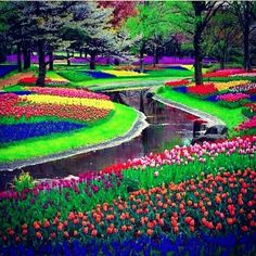 Keukenhof, also known as the Garden of Europe, is the world's second largest flower garden. It is situated in Lisse, the Netherlands.