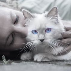 It's difficult for cat owners to satisfy their Cats, Because they are particularly vindictive animals.Here are 10 Mistakes Cat Owners Should Strictly Avoid. Cool Cats, Cool Cat Trees, Friendly Dog Breeds, Gatos Cool, Pet Ashes, Cat Behavior, Cat People, Cat Facts, Cat Breeds