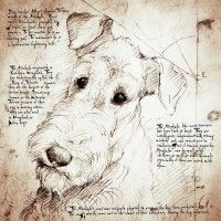 """This lovely Airedale face is a detail from the """"Airedale Study"""""""