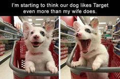trollpics daily afternoon funny picdump of the day 2 #dogsfunnypets