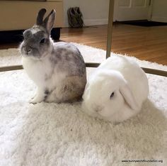 Beautiful bunny friends :)