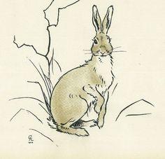 Cecil Aldin Rabbit Bunny Original Antique Art Print Matted Rare c1900