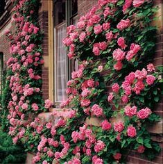 arbusto com flor - Pesquisa do Google