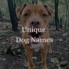 Funny Boy Names, Dog Names, Unique Names, Girl And Dog, Pitbulls, Dogs, Cute, Animals, Animales