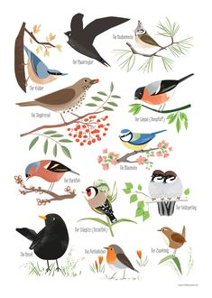 The illustrated poster shows 12 typical garden birds . The illustrated poster shows 12 typical garden birds: common swifts, crest Tropical Birds, Colorful Birds, Garden Animals, Garden Birds, Vogel Illustration, All Animals Images, Poster Shop, Bird Poster, Kunst Poster