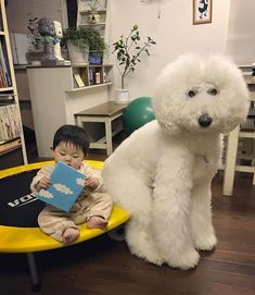This Little Japanese Girl And Her Pet Poodle Will Make Your Day | Bored Panda #Poodle #poodles