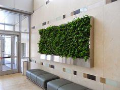 Vertical Garden #LivingWall #VerticalGarden #GreenWall