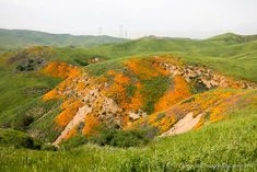 Where to See Wildflowers in Chino Hills State Park - California Through My Lens Chino Hills State Park, Wildflowers, State Parks, Waterfall, Lens, California, Mountains, Travel, Viajes