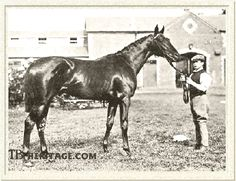 Rock Sand, winner of British Triple Crown and damsire to the immortal Man o' War