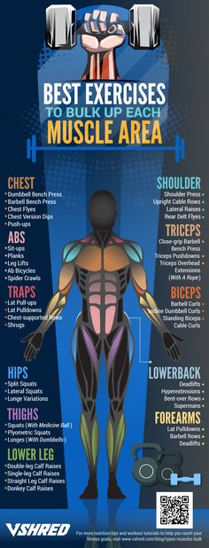 infographic | Best Exercises To Bulk Up Each Muscle Area Weight Training Workouts, Body Weight Training, Mens Fitness Workouts, Fitness Man, Fitness Exercises, Fitness Hacks, Yoga Fitness, Mental Training, Strength Training