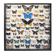 Museum Quality Insects Collection - Butterflies    This site has incredible bug displays and replica skeleton/skulls. Also, butterfly wing earrings.