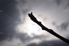 Naked branches of a tree against blue sky close up Branches, Close Up, Naked, Sky, Marketing, Heaven, Heavens, Eggplant