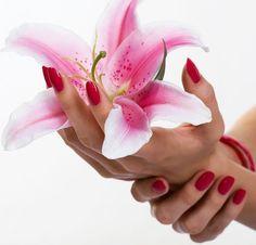 Star-gazer lily! <3
