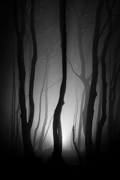Trees in the foggy darkness...