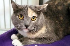 Update: Adopted :-)  Misty has been adopted from Seattle Humane!