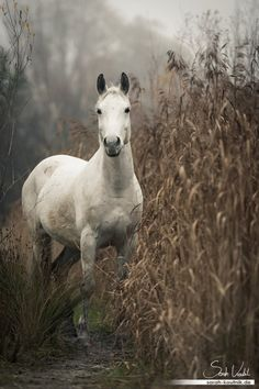 """Finn- The 'Wild' Horse"" by Sarah Koutnik"