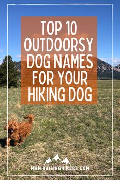 Naming a new pup? Plan to raise an outdoorsy dog who will hit the hiking trails with you? Check out these mountain lover dog names for the outdoorsy dog! We named our Labradoodle, Jasper after Jasper National Park. See the other names that were on our list! #hikingdogs #labradoodle #outdoordognames Hiking Dogs, Hiking Trails, Strong Dog Names, North Cascades National Park, Family Adventure, Labradoodle, Family Dogs, Cool Names, Happy Dogs