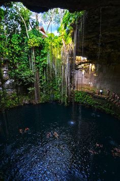 Yucatan Cenotes, Mexico: my whole family jumped in this beautiful cenote