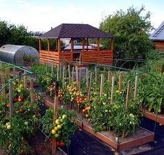 Как мои соседи по даче делают высокие грядки | ❀ Все растет ❀ | Яндекс Дзен Garden Edging, Vegetable Garden, Growing Vegetables, Raised Beds, Garden Landscaping, Gazebo, Outdoor Structures, Landscape, Plants