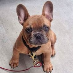 . ▫️What A Cutie! ☺️ ▪️By Unknown