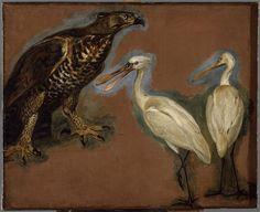 Pieter Boel | Un aigle et deux spatules | Images d'Art