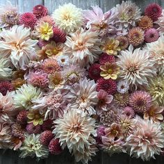 A collage of dahlias:  a Floret favorite.