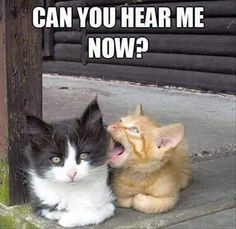"They could have made this better by writing ""can you hear me-ow"" ha ha get it ;P"