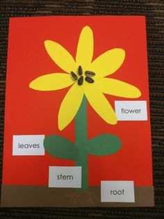 Parts of a Plant Craft www.letsgetreadyforkindergarten.com