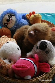 Soppy sloths. | The 29 Cutest Sloths That Ever Slothed